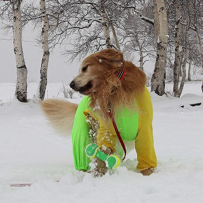 菅平で雪遊び♪_c0216518_2235158.jpg