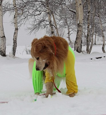 菅平で雪遊び♪_c0216518_22352741.jpg