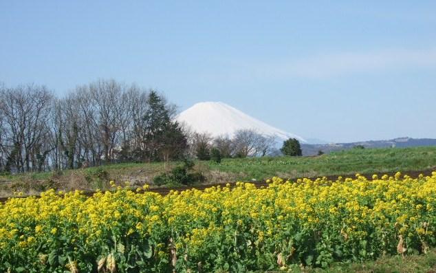見事な富士山.....綺麗です!_b0137932_17505041.jpg