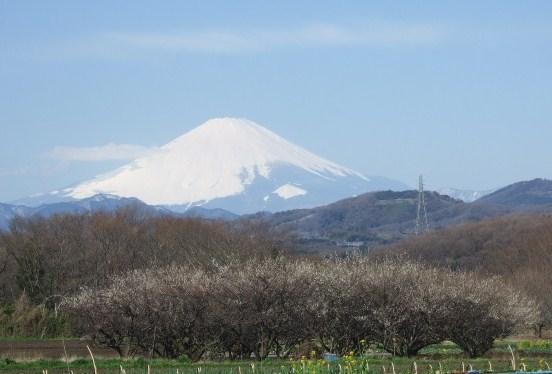 見事な富士山.....綺麗です!_b0137932_1753894.jpg