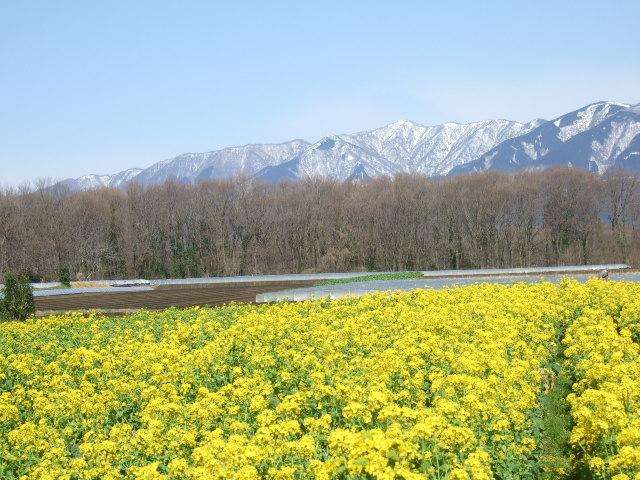 見事な富士山.....綺麗です!_b0137932_17551544.jpg