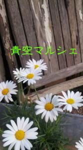 a0120254_845710.jpg