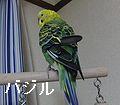 f0196665_003061.jpg