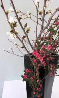 3月は別れの季節_c0165824_2052772.jpg