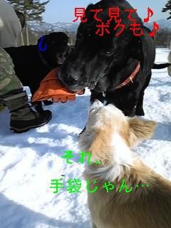 f0148927_7421210.jpg