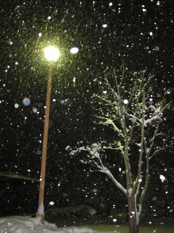 大雪_f0225428_153994.jpg