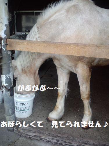 b0127531_2013864.jpg