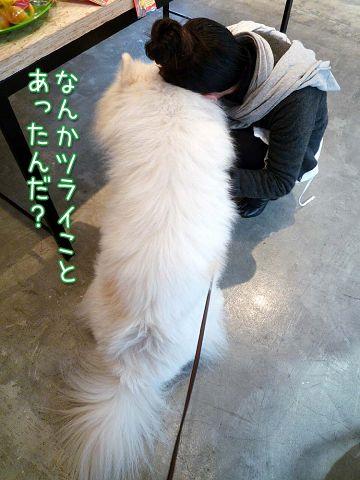 CHARM WAGS 黒岡部長_c0062832_18183776.jpg