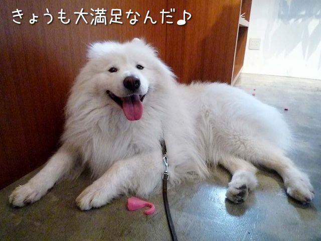 CHARM WAGS 黒岡部長_c0062832_1819997.jpg