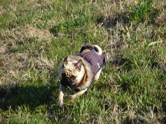 暖かい日はお散歩が二回に増える_a0159640_13495569.jpg