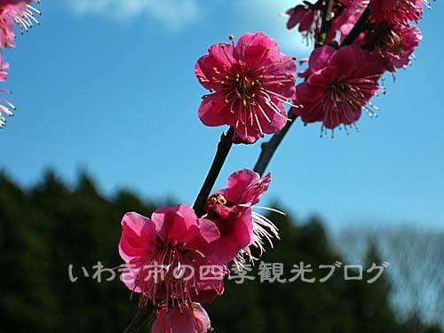 f0105342_1685682.jpg