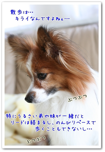 d0013149_13191981.jpg