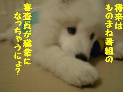 a0166954_320498.jpg