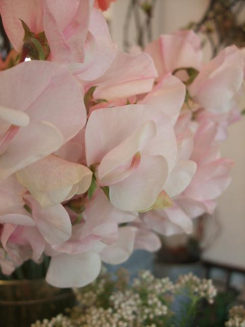 オークリーフ(八重ピンクのクリスマスローズ)_f0049672_17251253.jpg
