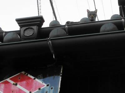 ホーロー看板の上の猫_c0193077_22442556.jpg