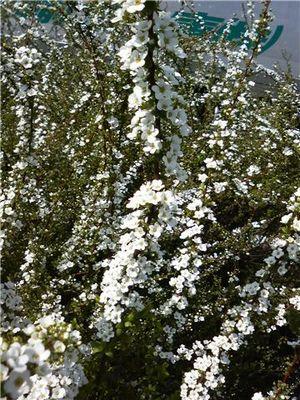 寒くても春。_d0118293_16551795.jpg