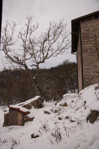 目玉焼きと雪とユキちゃん_f0106597_22575546.jpg