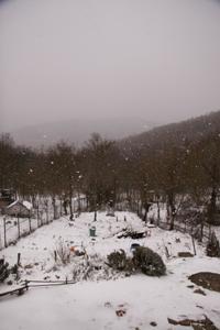 目玉焼きと雪とユキちゃん_f0106597_2365734.jpg