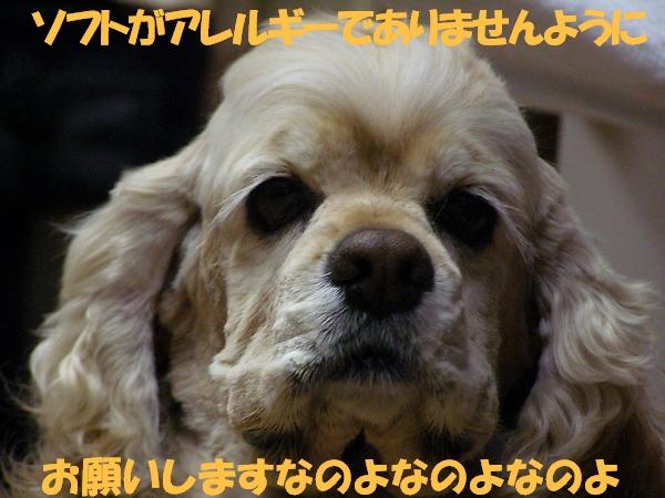b0067012_22133190.jpg