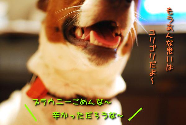 f0203612_2322079.jpg