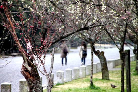 京都御苑の桃林で_e0048413_19454560.jpg