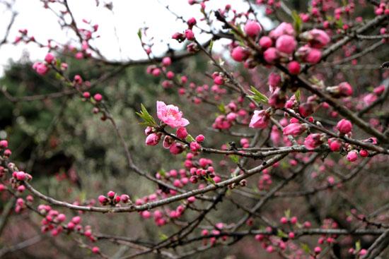 京都御苑の桃林で_e0048413_19461787.jpg