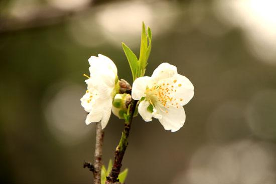 京都御苑の桃林で_e0048413_19464638.jpg