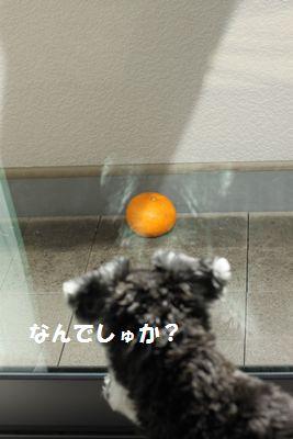 f0197317_21341058.jpg