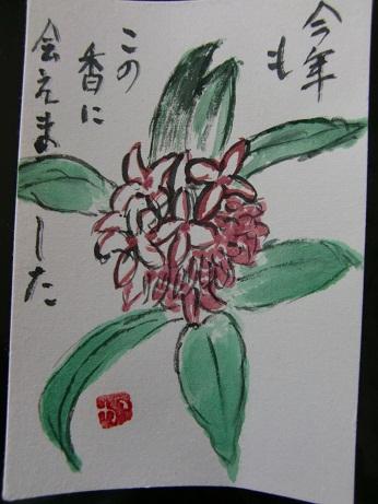 沈丁花_c0079828_17265474.jpg