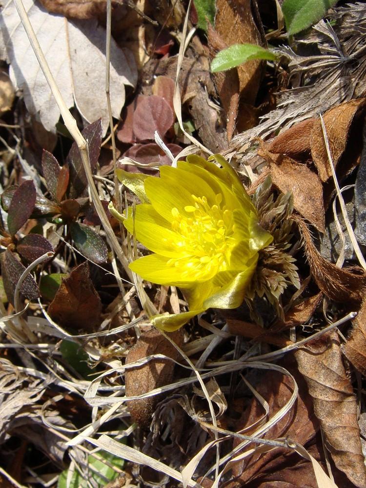 春が近づいております_c0111229_1822135.jpg