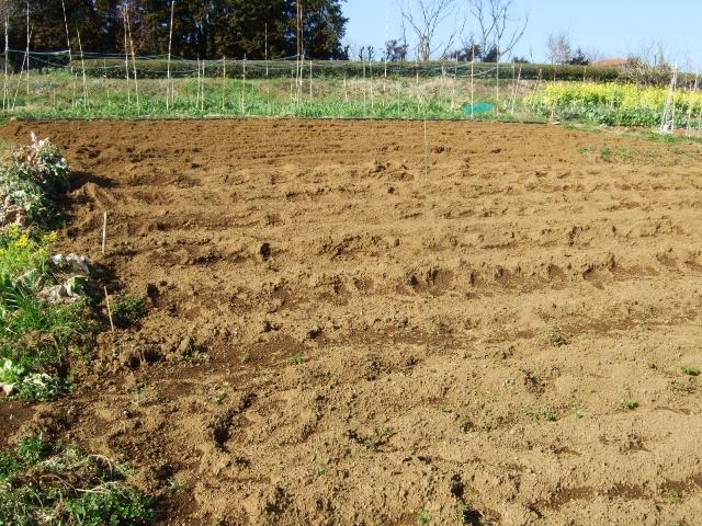 プロ農家と素人菜園....こんなに違う!_b0137932_22334756.jpg