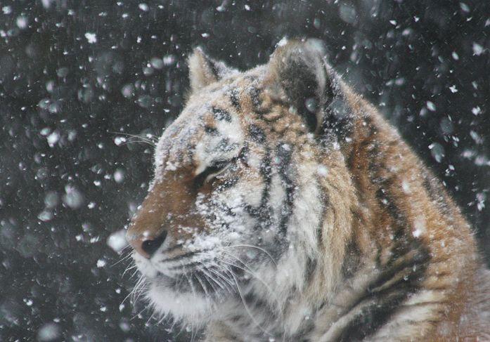 ノンちゃんは雪がお似合い_c0155902_21381085.jpg