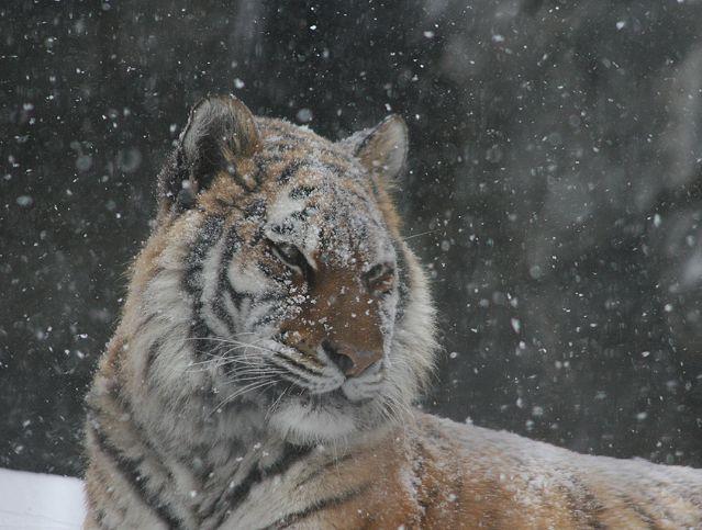 ノンちゃんは雪がお似合い_c0155902_21385969.jpg