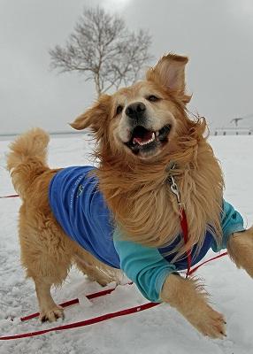 今週末は今シーズン最後(?)の雪遊び♪ PART1_c0216518_22131672.jpg