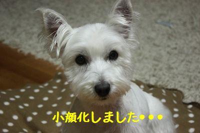 e0181928_20124164.jpg