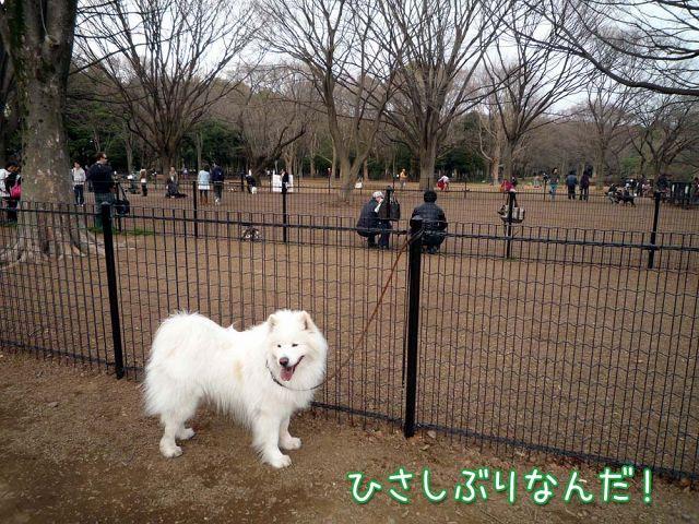 ひさしぶりおっきな公園_c0062832_14411515.jpg