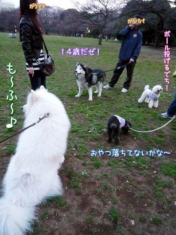 ひさしぶりおっきな公園_c0062832_1442043.jpg