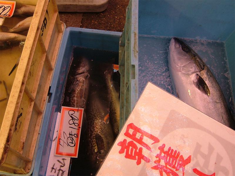 近江町朝獲れ鮮魚!!_c0110051_155228.jpg