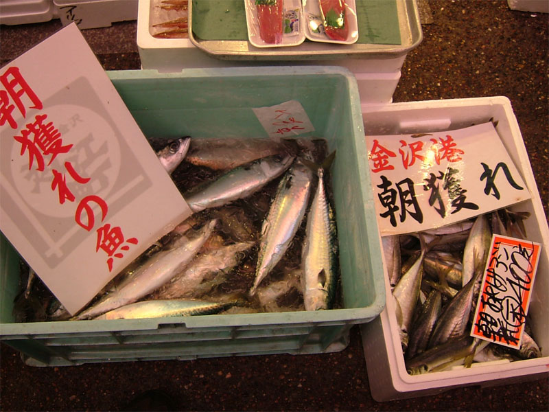 近江町朝獲れ鮮魚!!_c0110051_15587.jpg
