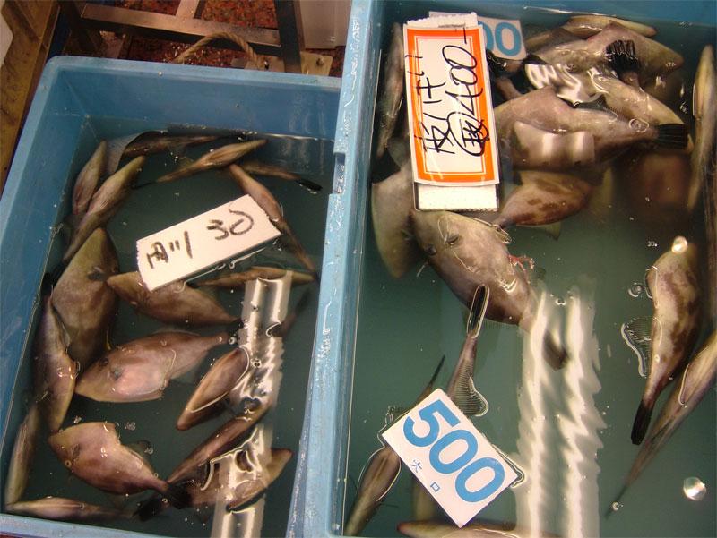 近江町朝獲れ鮮魚!!_c0110051_16292.jpg