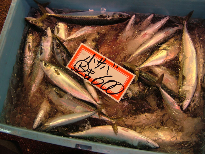 近江町朝獲れ鮮魚!!_c0110051_1717.jpg