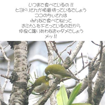 a0052156_1339423.jpg