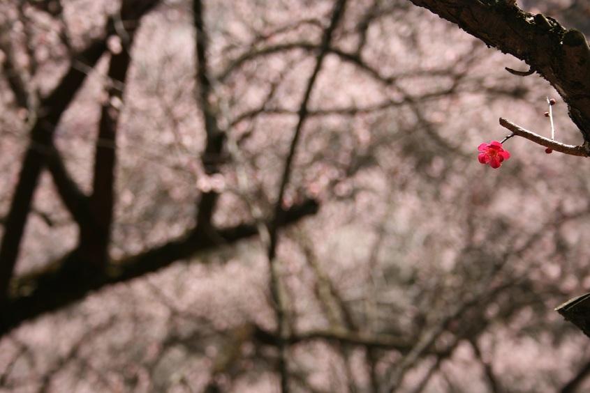梅にうっとり。_b0027781_21421160.jpg