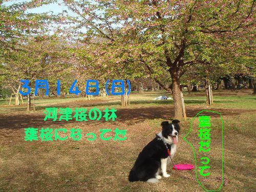 b0101991_15212218.jpg