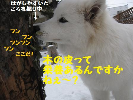 f0212597_10152185.jpg
