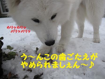 f0212597_10153595.jpg