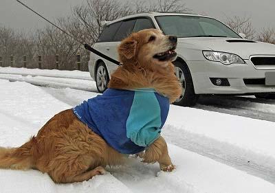 今週末は今シーズン最後(?)の雪遊び♪ PART2_c0216518_20262180.jpg