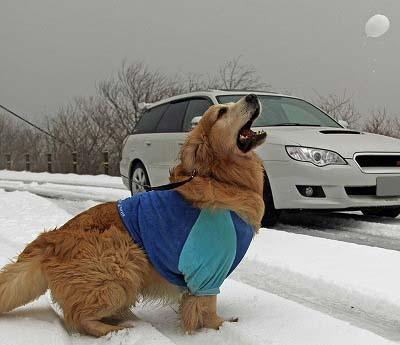 今週末は今シーズン最後(?)の雪遊び♪ PART2_c0216518_20264044.jpg