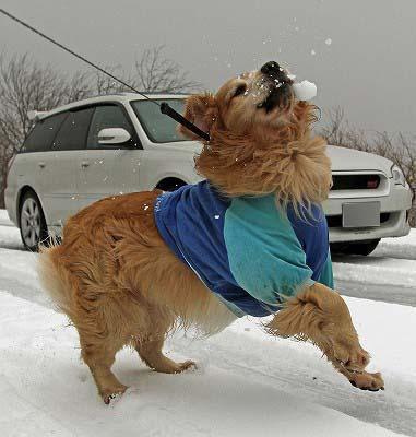 今週末は今シーズン最後(?)の雪遊び♪ PART2_c0216518_20271713.jpg