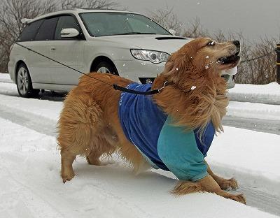 今週末は今シーズン最後(?)の雪遊び♪ PART2_c0216518_20273577.jpg